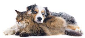 L'Animatout : votre expertise locale pour le bien-être de votre animal