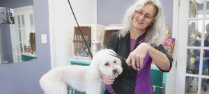 Louise Blanchette Toilettage : dans le respect des animaux