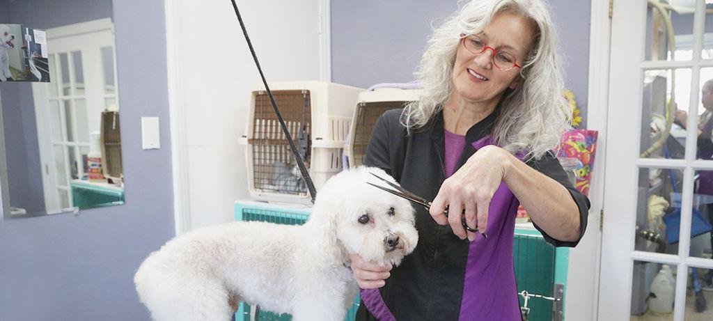 Louise blanchette toilettage dans le respect des animaux for Chambre de commerce de sherbrooke